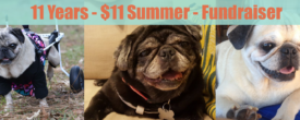 11 Years – $11 Summer – Fundraiser
